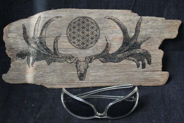 Irish Elk Skull with Flower of Life