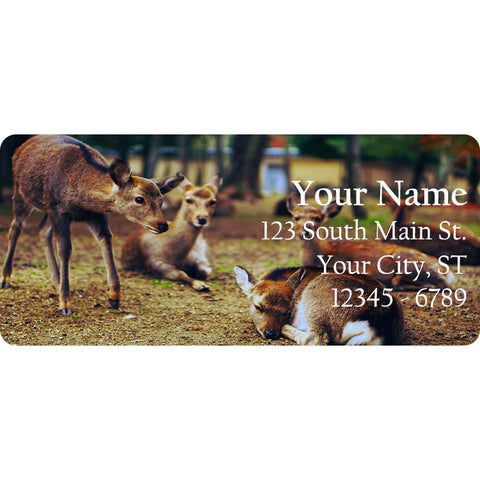 Deer Doe Personalized Return Address Labels Baby Deer in the Country - The FinderThings