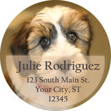Tibet Terrier Dog Puppy Cute Face Personalized Return Address Labels