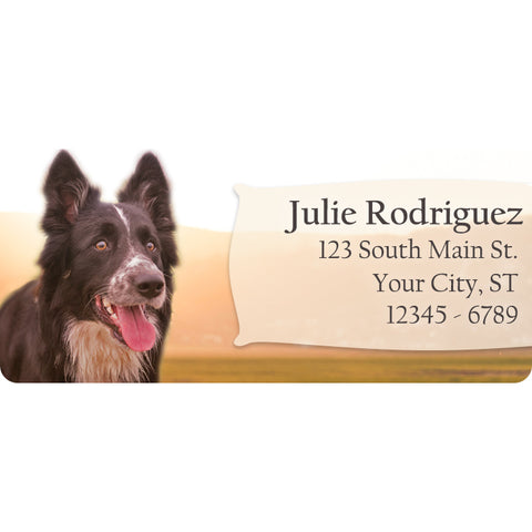 Border Collie Dog Puppy Lab Personalized Return Address Labels - The FinderThings