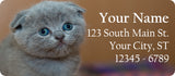 Grey Kitten and Cat Personalized Return Address Labels Adorable Kitten - The FinderThings