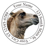 Camel Personalized Return Address Labels Cute Camel in the Desert - The FinderThings