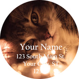 Cat and Lights Personalized Return Address Labels Kitten Playing with Lights - The FinderThings