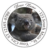 Koala Bear Personalized Return Address Labels Koala Bears in Tree