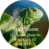 Tree Frog Personalized Return Address Labels Cute Tree Frog Toad - The FinderThings