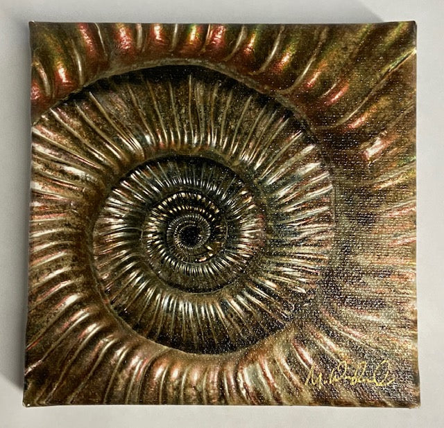 "Metallic brown 'Ammonite' Macro Photo by Mike Woodward on canvas.    5"" x 5"""