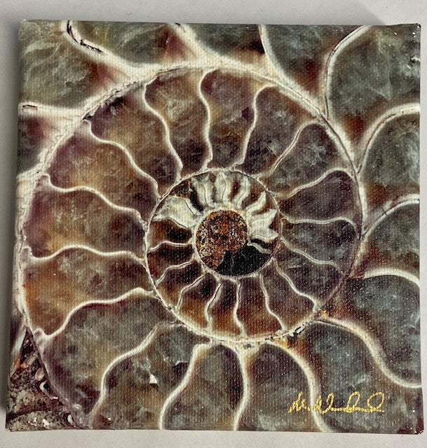 "Green/Grey and brown ammonite macro photo on canvas by Mike Woodward.    5"" x 5"""