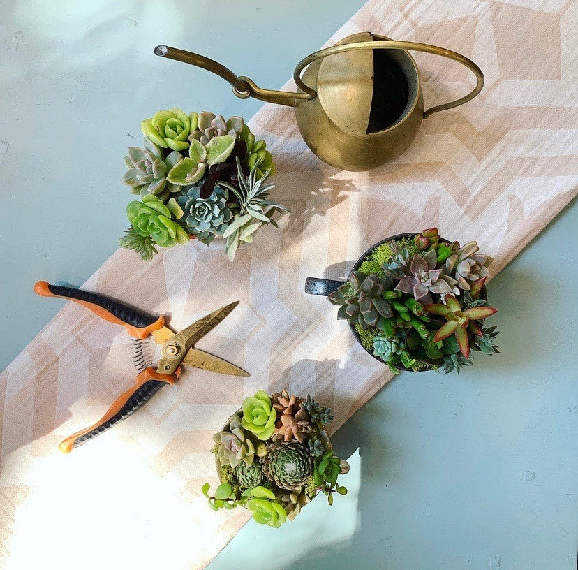 "Celebrating Moms! ""Tea Cup & Saucer"" Succulent Workshop ~ Sunday, May 12, 11am-12pm"