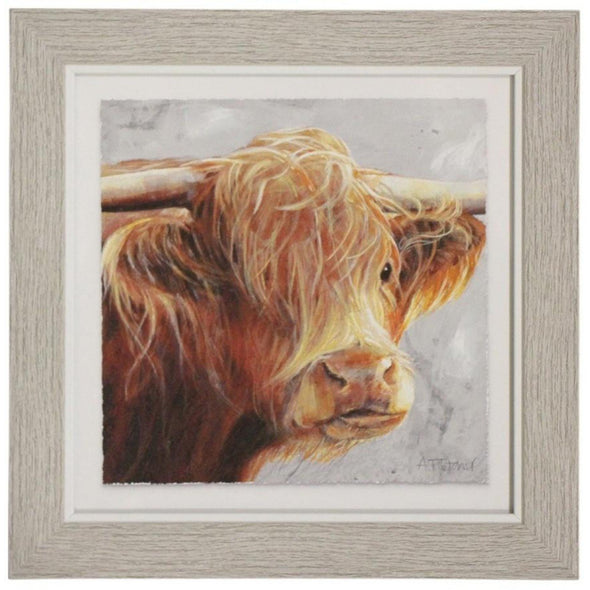 Framed Print Brown Steer
