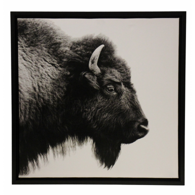Framed Bison Picture 1