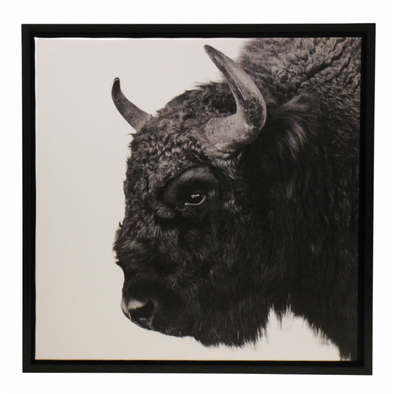 Framed Bison Picture 2