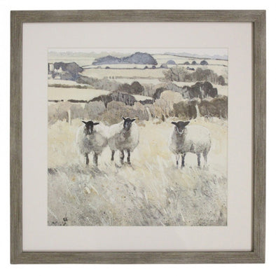Framed Print Sheep Grazing