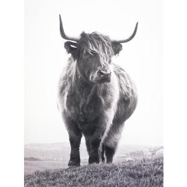 Wall Canvas Highland Cow With Natural Frame 90 x 120cm