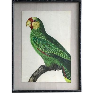 Wooden Glass Framed Parrot