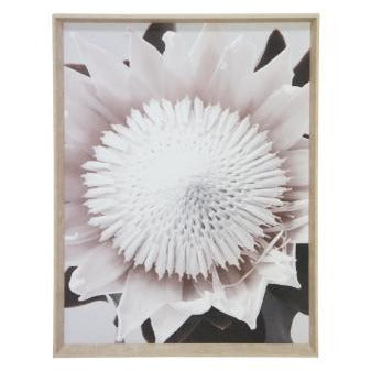 King Protea Print Framed
