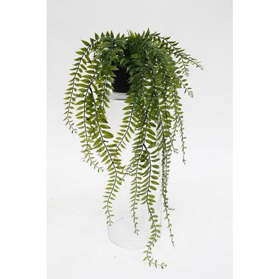 Sword Fern Plant Potted