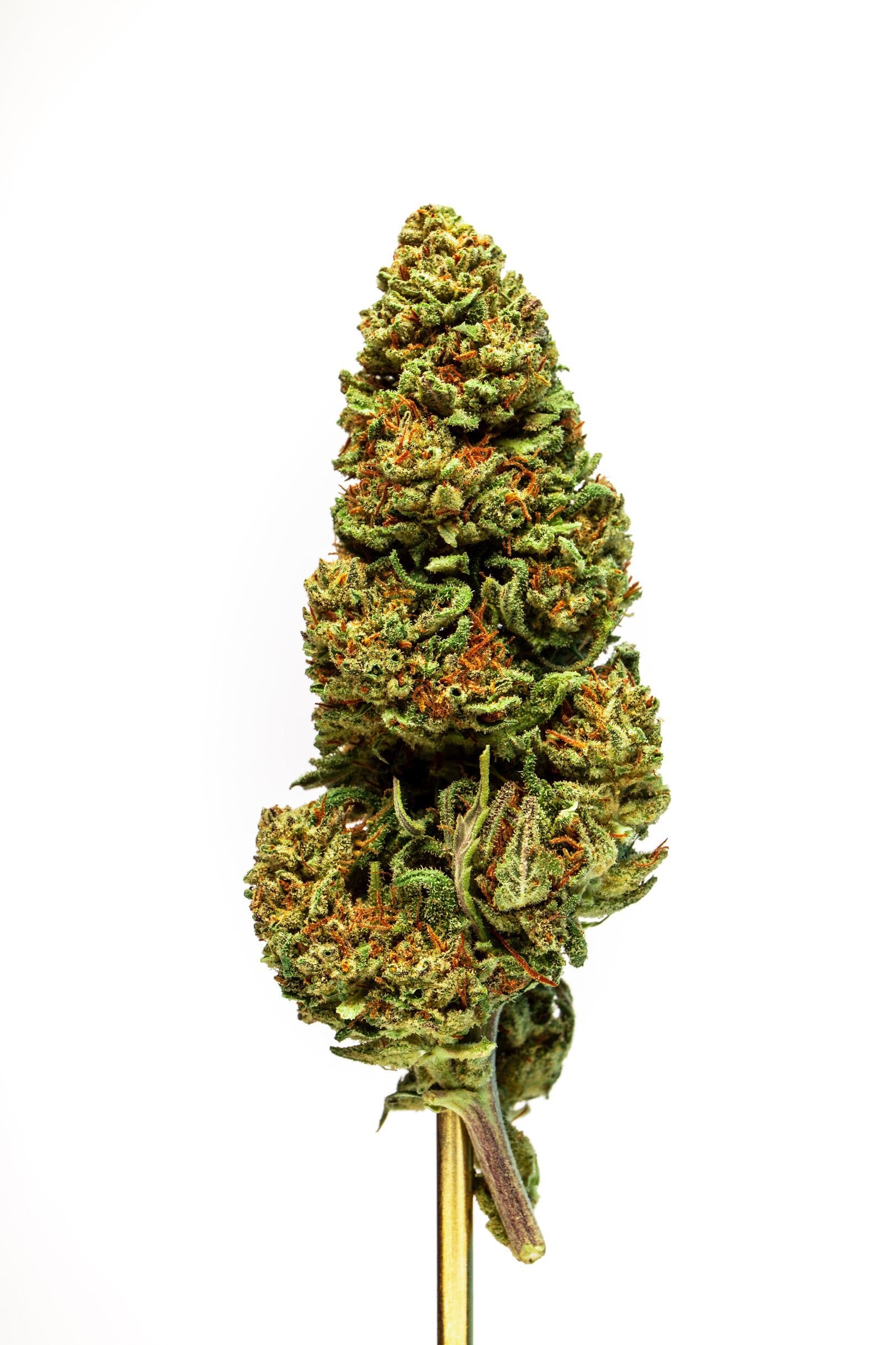 Lifter Strain Hemp Blue Js - 5 Pack