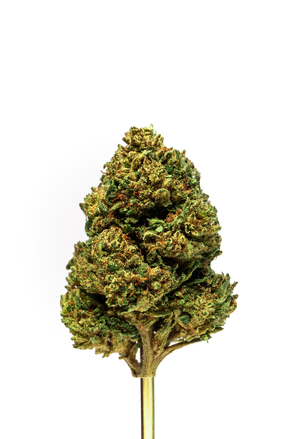 Kush Hemp Strain Connoisseur Blue Ridge Flower- Pound