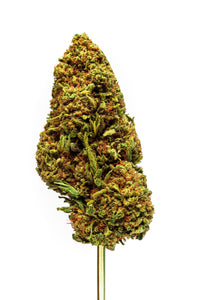 Pineberry Strain Blue Ridge Selects Flower