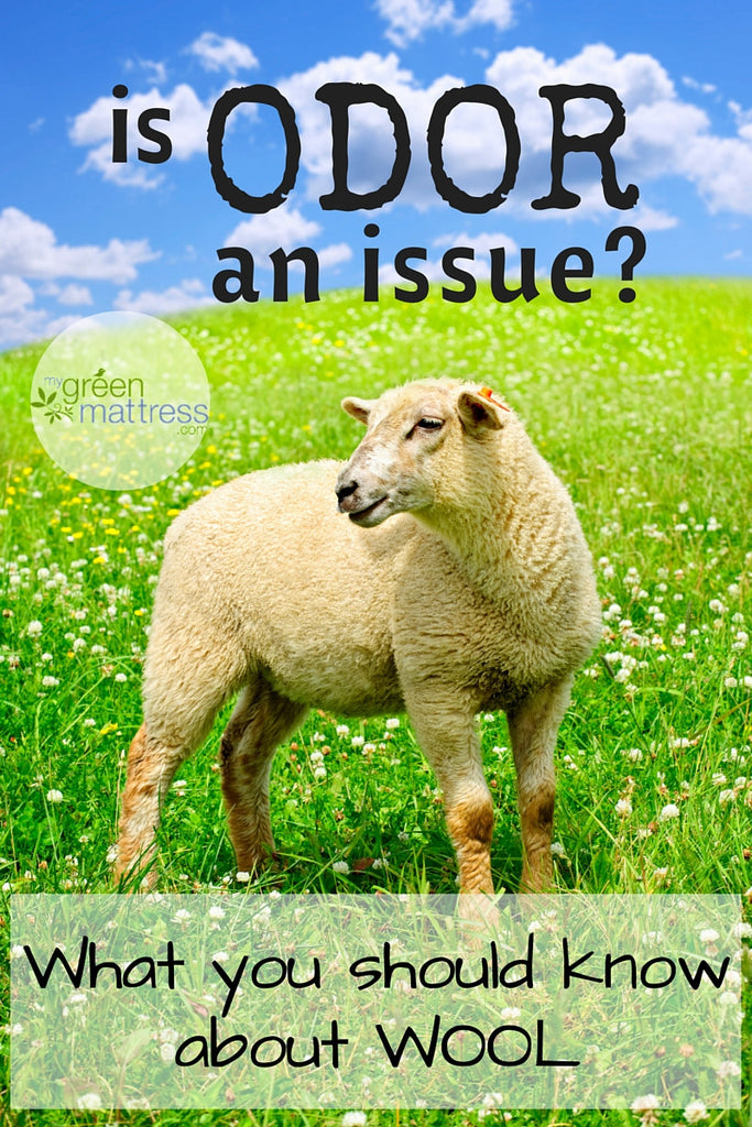 Is Odor an Issue for Natural Wool Mattresses?