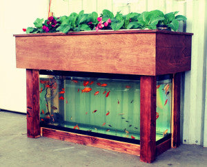 Aquaponics, It's Time!