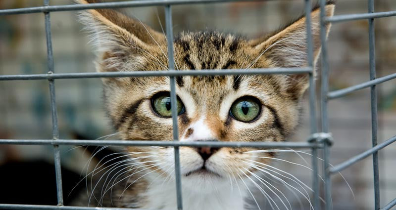 Animal Rescue and Animal Shelter: What is the Difference?