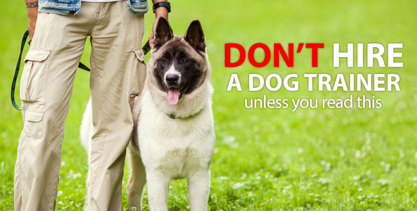 Don't Hire a Dog Trainer to Train Your Dog Unless You Read This