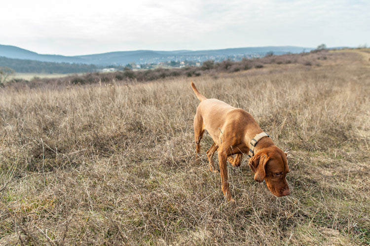 Everything You Ever Wanted to Know About Why Dogs Poo Where They Do