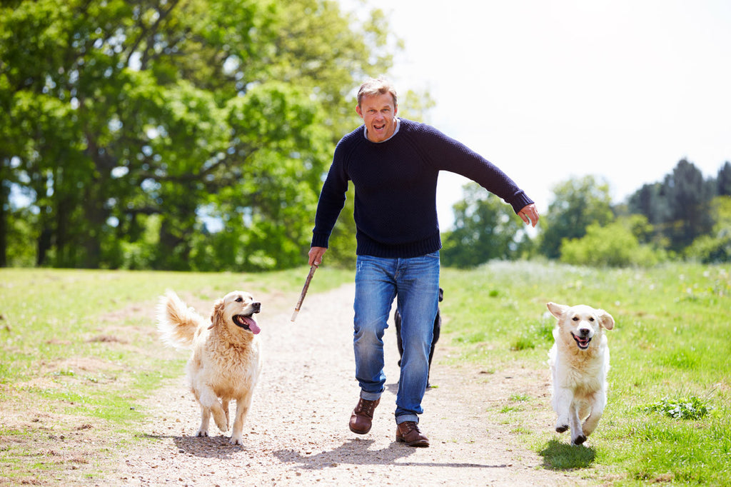 3 ways to naturally boost your dog's immune system at home