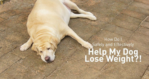 How Do I Safely and Effectively Help My Dog (or Cat) Lose Weight?!