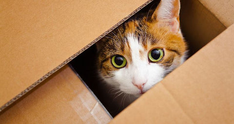 How to Help Your Cat Survive a Move