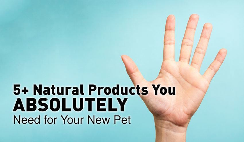 5+ Natural Products You ABSOLUTELY Need for Your New Pet