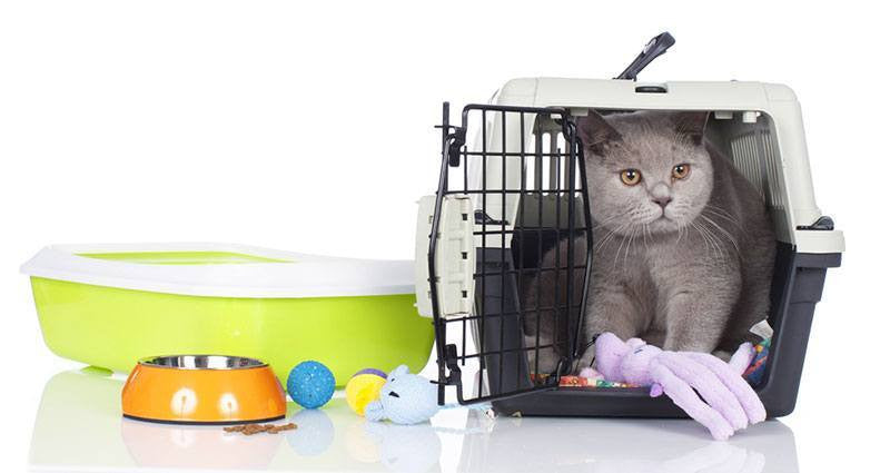 Pet Supplies - The Ultimate Guide To Pet Adoption