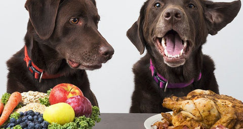 Why Manufactured 'Vegan' Pet Foods May Not Be Enough for Your Dog?