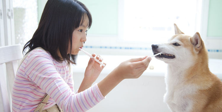 Your Pet Will Love Tooth Brushing After This!