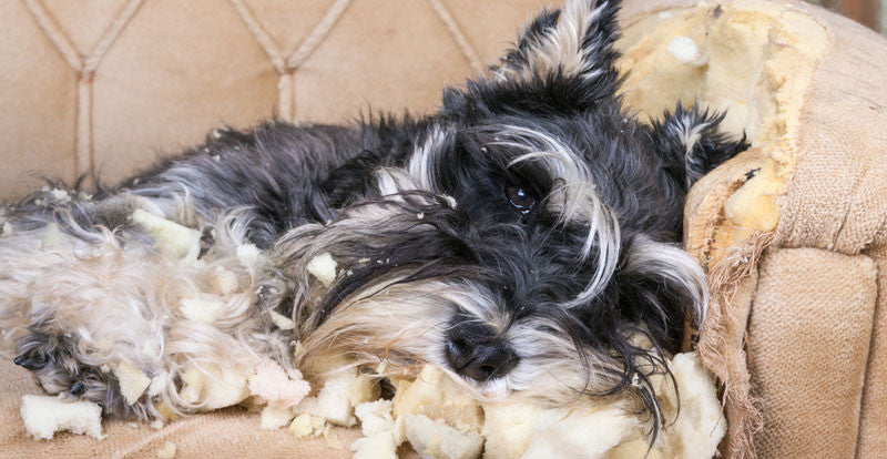 Separation Anxiety in Dogs – How to efficiently treat this behavior ?