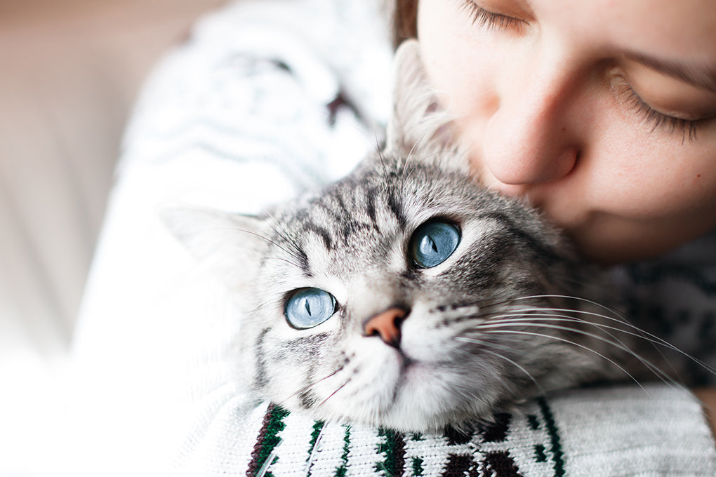 How to help your cat fight cancer naturally