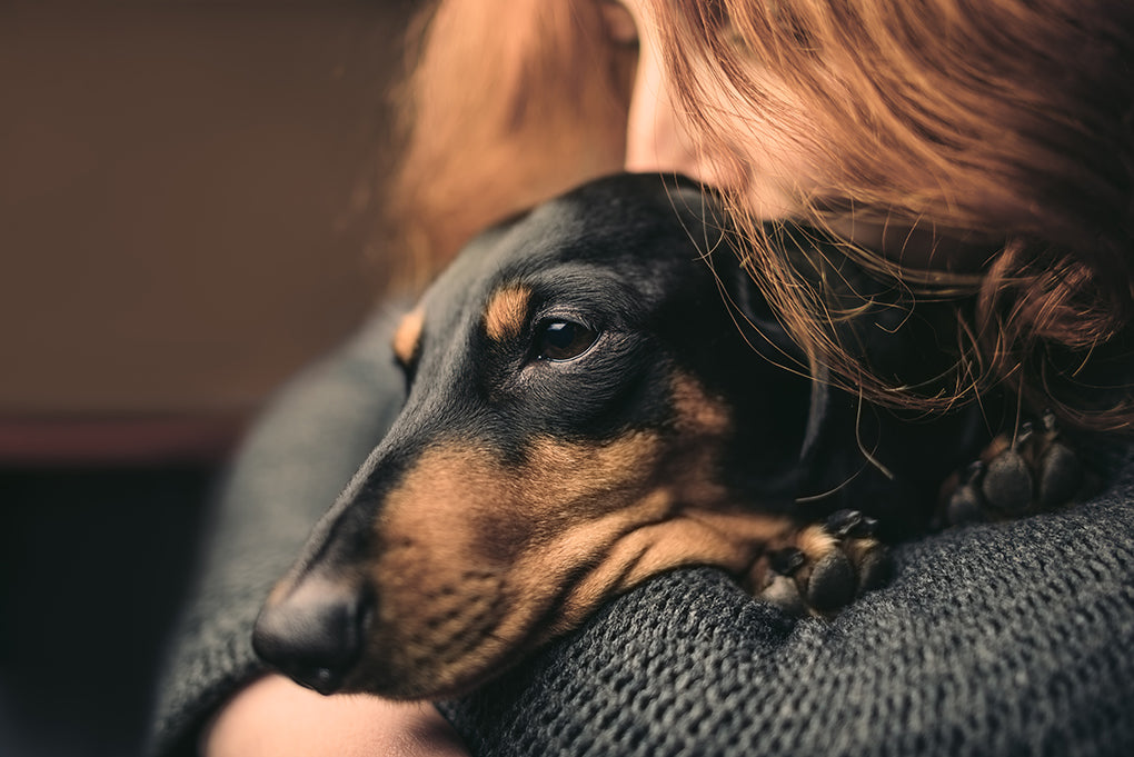 Complete Guide to Dog Cancer: Types, Symptoms and Treatments