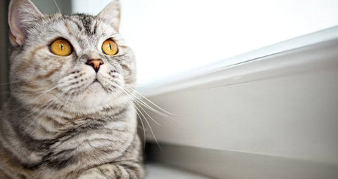 10 Tips to Keep Your Cat Mentally & Physically Healthy