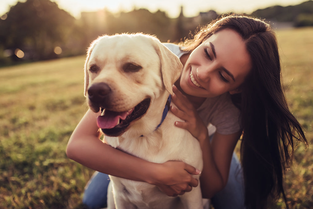 How Hiring A Professional Dog Trainer Can Change Your Life