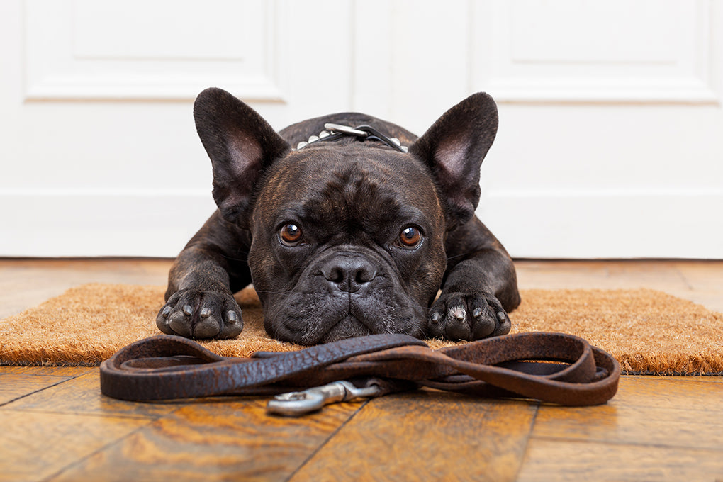 The Biggest Mistakes To AVOID When Training Your Dog
