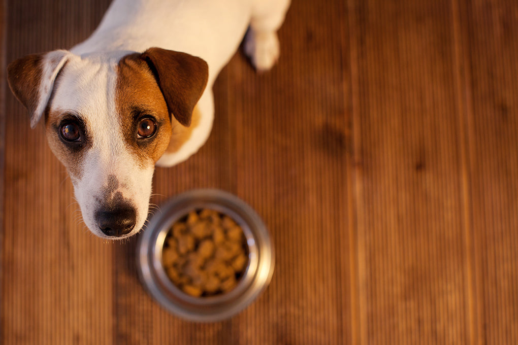 What are the best foods to feed a dog with cancer?