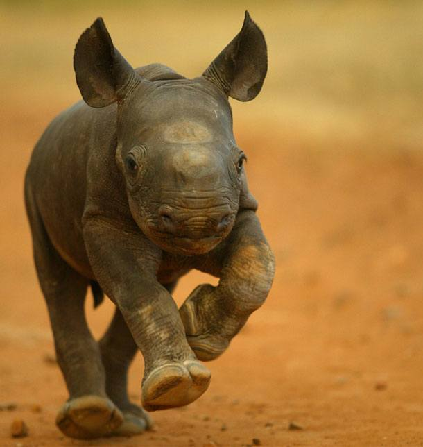 Image result for baby wildlife pic