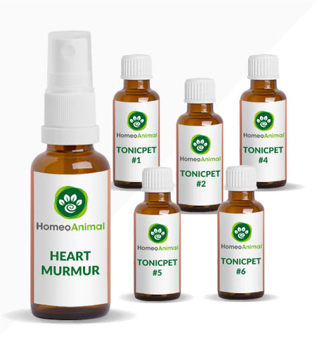 HEART MURMUR - ADVANCED KIT