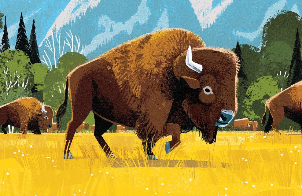 Grand Teton National Park Poster (Bison)