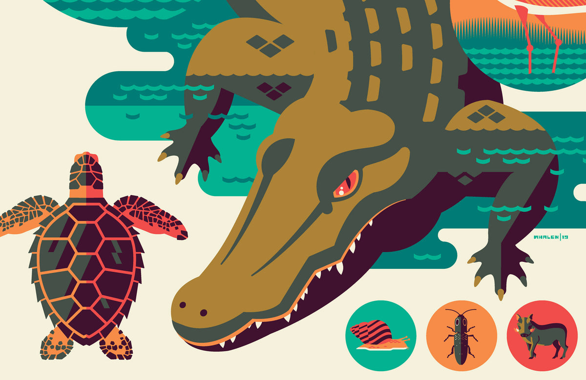 Iconic Wildlife of Everglades National Park Poster