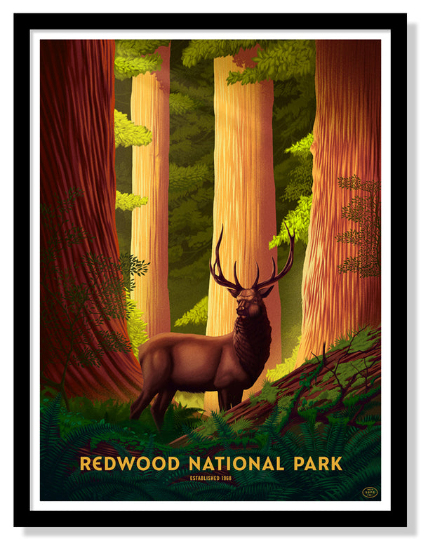 Redwood National Park Poster (Large Timed Edition)