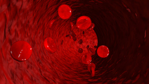 Red Blood Cells Stream Stock Video