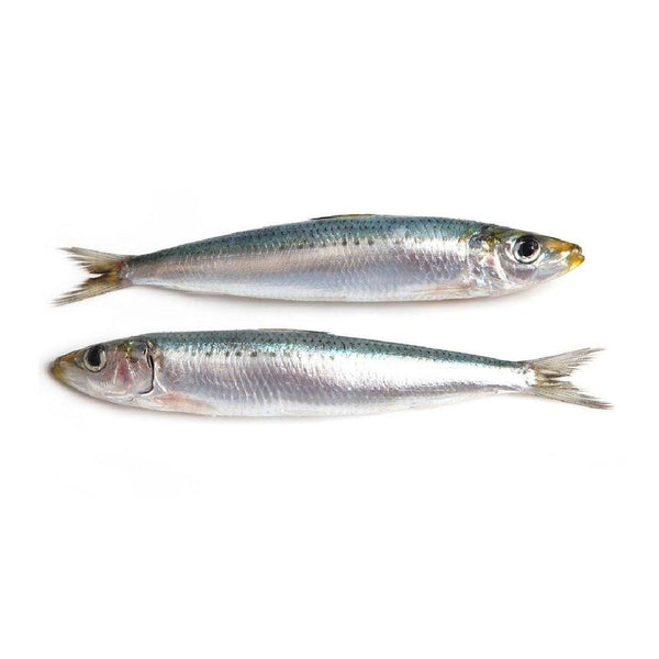 Grocemania Grocery Delivery London| Sardines 1KG