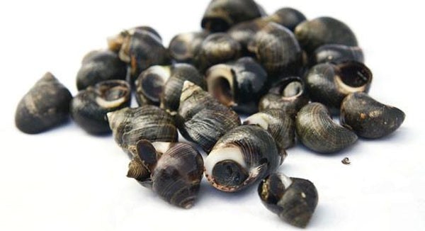 Grocemania Grocery Delivery London| Winkles 100g